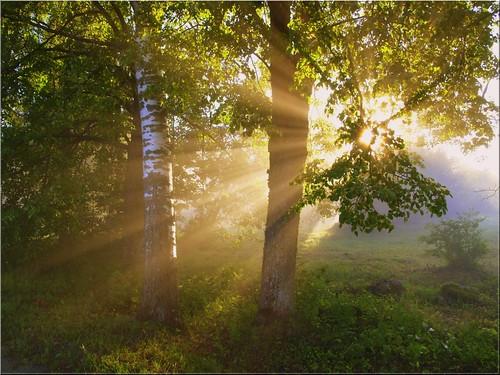 morning trees sun mist tree misty fog landscape foggy puu puud päike morningfog hommik udu naturesfinest mistysunrise maastik foggysunrise päikesetõus olympuse400 mywinners welcometoestonia anawesomeshot superhearts janne4janne udunepäikesetõus udune