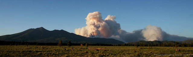 Panorama of the Schultz Fire, Flagstaff, AZ. Image courtesy Calvin Johnson, Leupp, Arizona and Coconino National Forest.