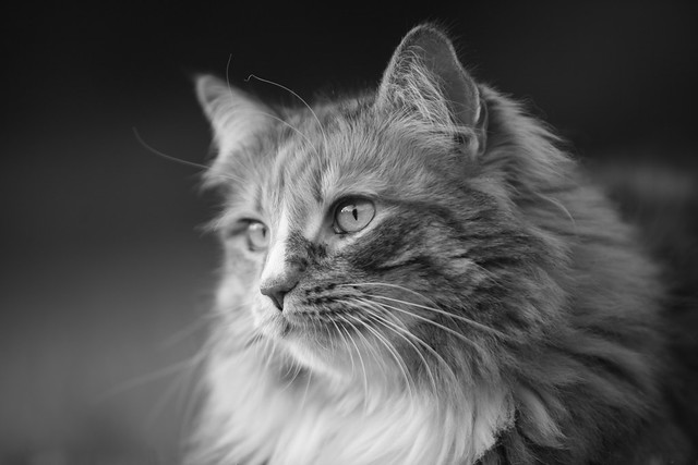 Why There's Nothing Wrong With Photographing Your Cat