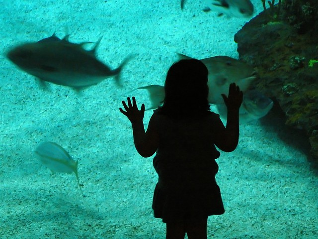 Child at NC Aquarium (silhouette)
