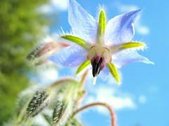 whimsy flower