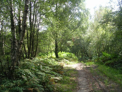 Wooded track