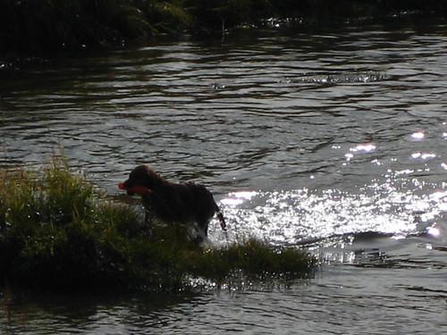 dog, reflection, water, lake, hatcher pass,… IMG_0360.JPG