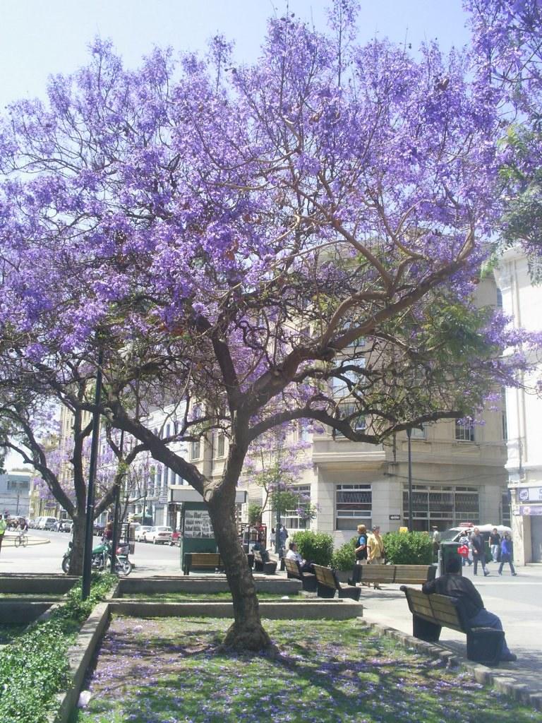 Arbol De Flores Moradas Xd Un Arbol Colorido En Las Cercan Flickr