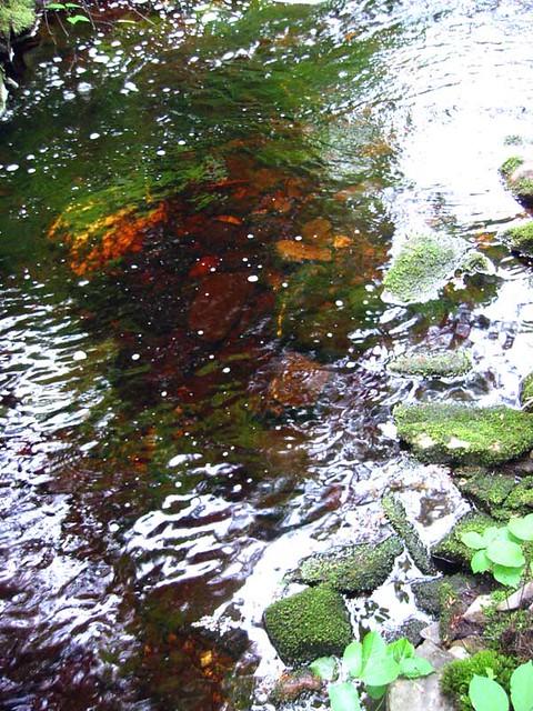 Exstream colors