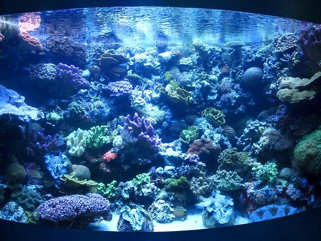 Aquarium Of The Pacific Flickr Photo Sharing