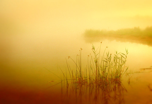 morning water fog sunrise wow gold dawn golden pond rest stillness repose jelke outstandingshots anawesomeshot topofthefog superhearts