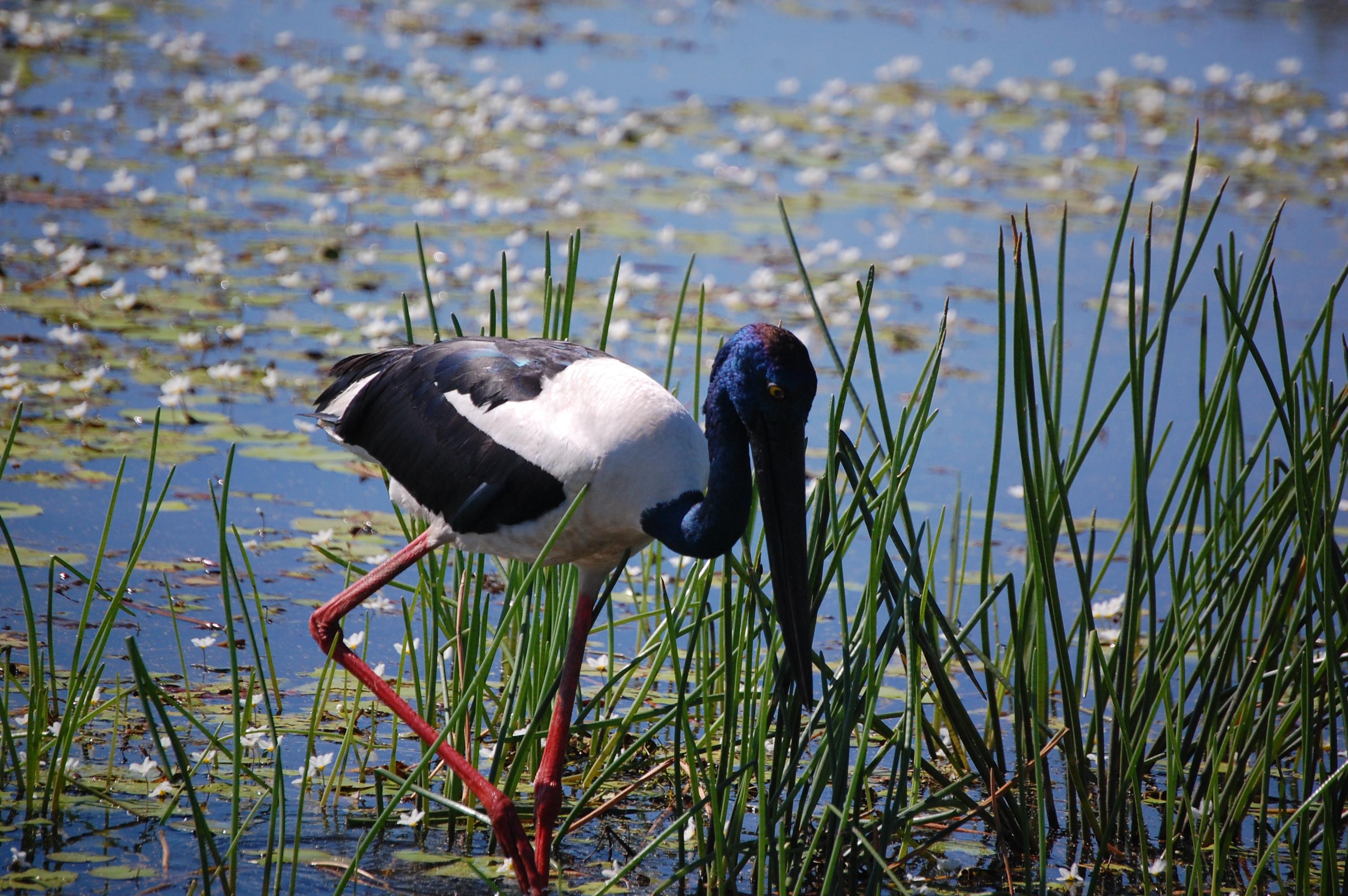One of Kadaku's birds