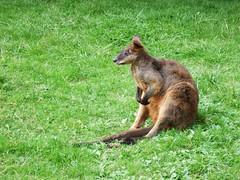 Züricher Zoo