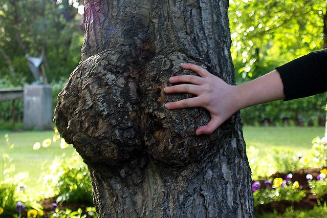 Tree Butt 50