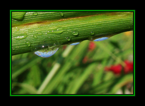 flowers flower macro reflection minnesota droplets drops dof drop refraction droplet mn purgatorycreek weirdauntmartha