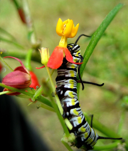 Nature's Covetous Affair_7715