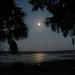 Cove Moon