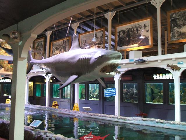 Key West 2006 Key West Aquarium By Catxcatxx Flickr Photo Sharing
