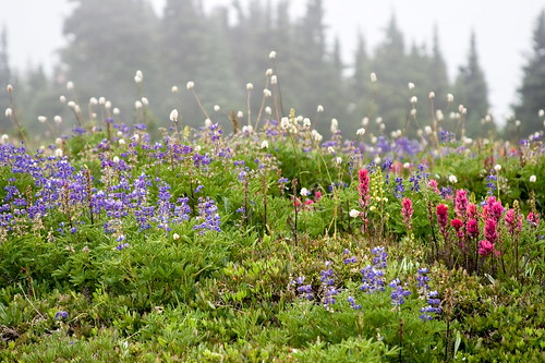 Flowers in the fog by The Bacher Family