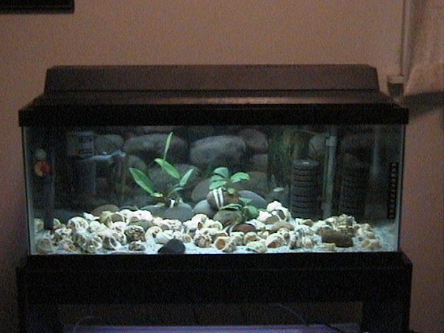 75 gallon long aquarium 33 gallon long cherry shrimp for 20 gallon long fish tank