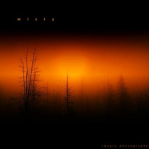 sun canada tree art nature silhouette misty fog sunrise canon photography photo bravo foto photographie image quebec québec charlevoix imapix magicdonkey gaetanbourque abigfave infinestyle bratanesque fiveflickrfavs 6monthsnoless imapixphotography gaëtanbourquephotography
