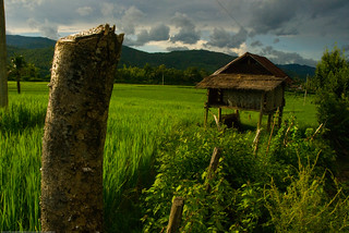 Rice paddies outside of Luang Prabang, Laos