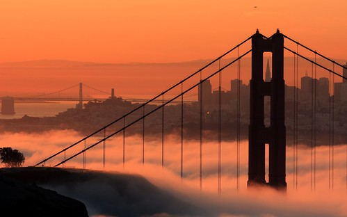 sf sanfrancisco california ca city morning bridge usa tree fog skyline america plane sunrise buildings am bravo downtown goldengatebridge goldengate coittower baybridge transamerica takeoff soe silhoutte sfbay ggb abigfave superaplus aplusphoto frhwofavs thegoldendreams alemdagqualityonlyclub megatopofthefog goldenvisions enlightedbridge
