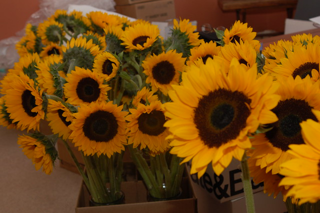 Sunflowers, ready for the wedding