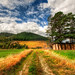 The Gentle Grasses of New Zealand by Trey Ratcliff