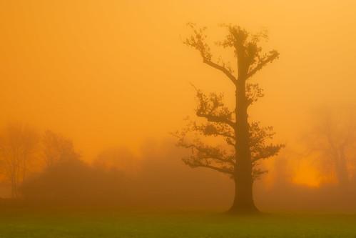 Sodium Cloud Forest, Rickmansworth