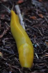 flower(0.0), leaf(0.0), plant(0.0), flora(0.0), produce(0.0), yellow(1.0), macro photography(1.0), slug(1.0),