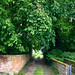 Small photo of Country lane in Allington