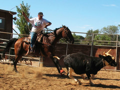 western riding(0.0), ranch(0.0), pack animal(0.0), barrel racing(0.0), animal sports(1.0), rodeo(1.0), cattle-like mammal(1.0), equestrianism(1.0), team penning(1.0), mare(1.0), stallion(1.0), equestrian sport(1.0), sports(1.0), charreada(1.0),