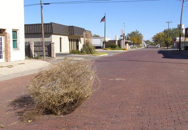 tumblin tumbleweed