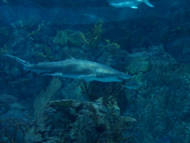 Galveston Texas Moody Gardens Aquarium Pyramid 2010