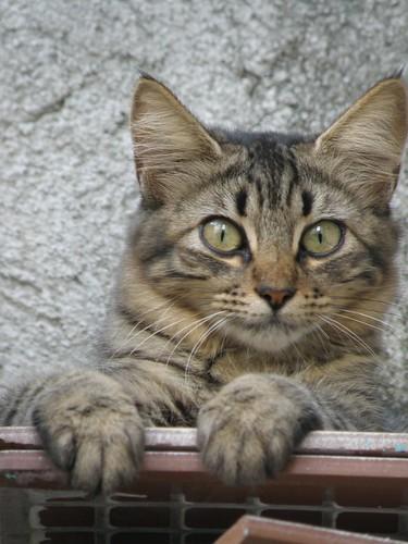 Gatos - higiênicos por natureza - Petlove - O Maior Petshop Online do Brasil