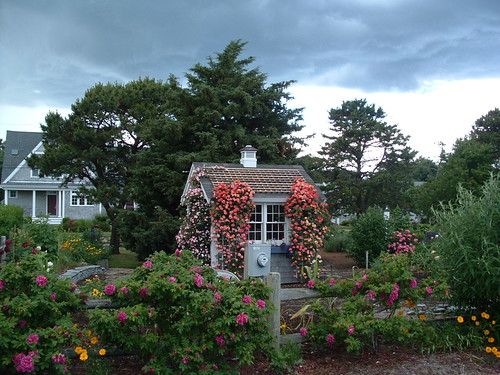Rose Covered Shed