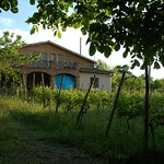 Georgian Vineyard - Kakheti, Georgia