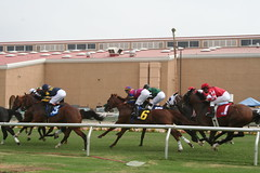 horse trainer(0.0), harness racing(0.0), animal sports(1.0), horse racing(1.0), racing(1.0), equestrian sport(1.0), sports(1.0), race(1.0), race track(1.0), jockey(1.0),