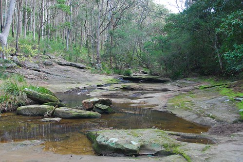 Bush Creek
