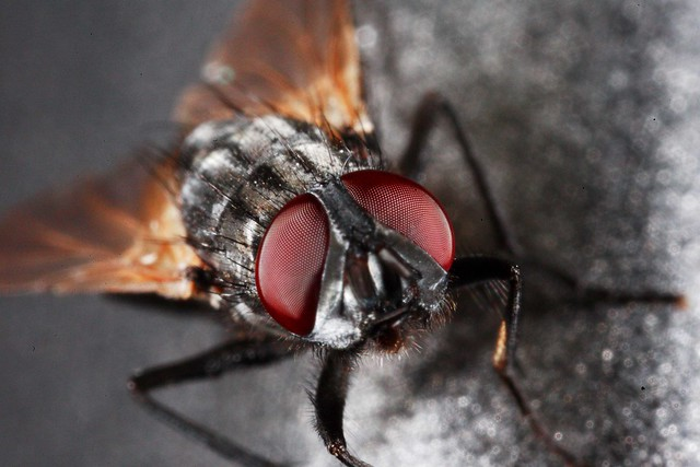fly_upclose_small