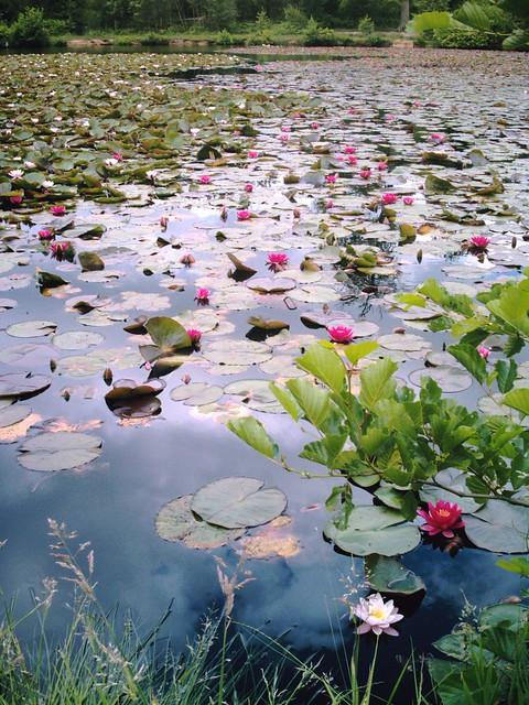 Aqua-flora