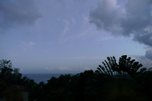 trees sky bird water animal clouds sunrise dawn pigeon guadeloupe caribbeansea basseterre bouillante ravenala travellerstree 201004guadeloupe pigeonbouillante