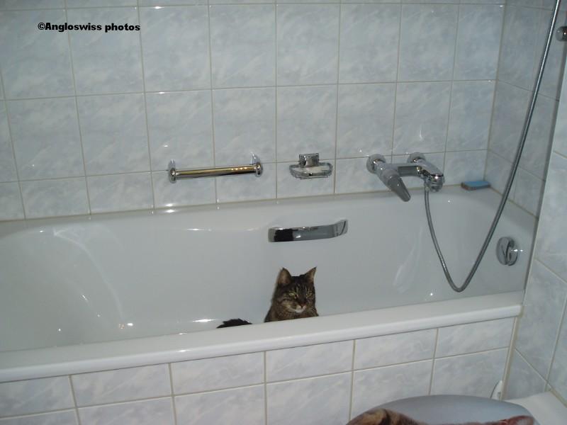 Tabby hiding in the bath