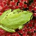 frog image, photo or clip art