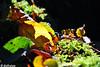 <p>Moos und Blätter im Sonnenschein</p>