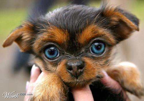 Just Cute Puppies A Gallery On Flickr