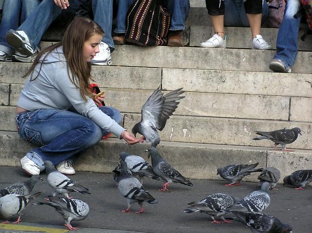 Pigeons@Sacre Coeur