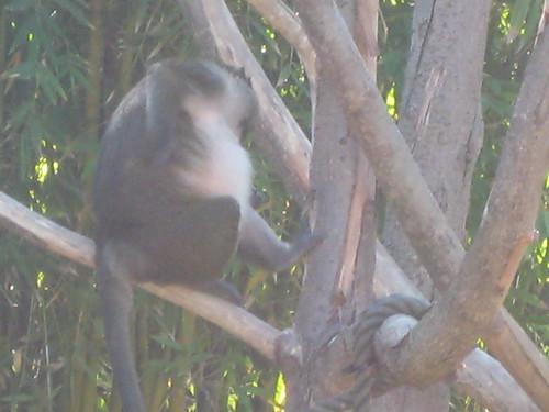 The Beaker of monkeys