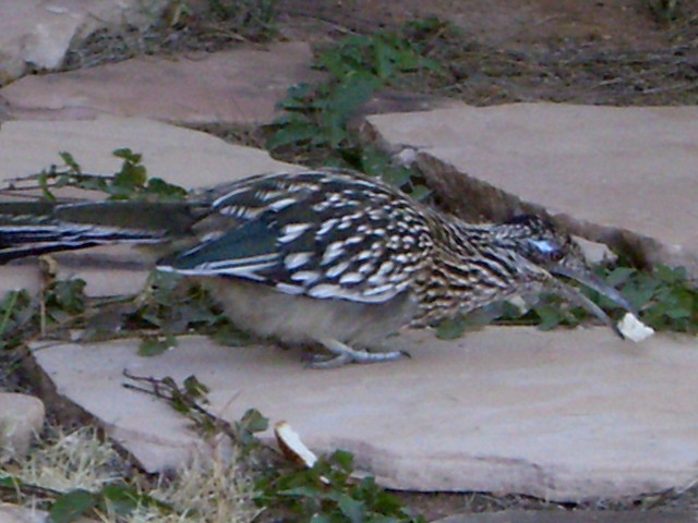 Roadrunner Mobile Home Park Borrego Springs