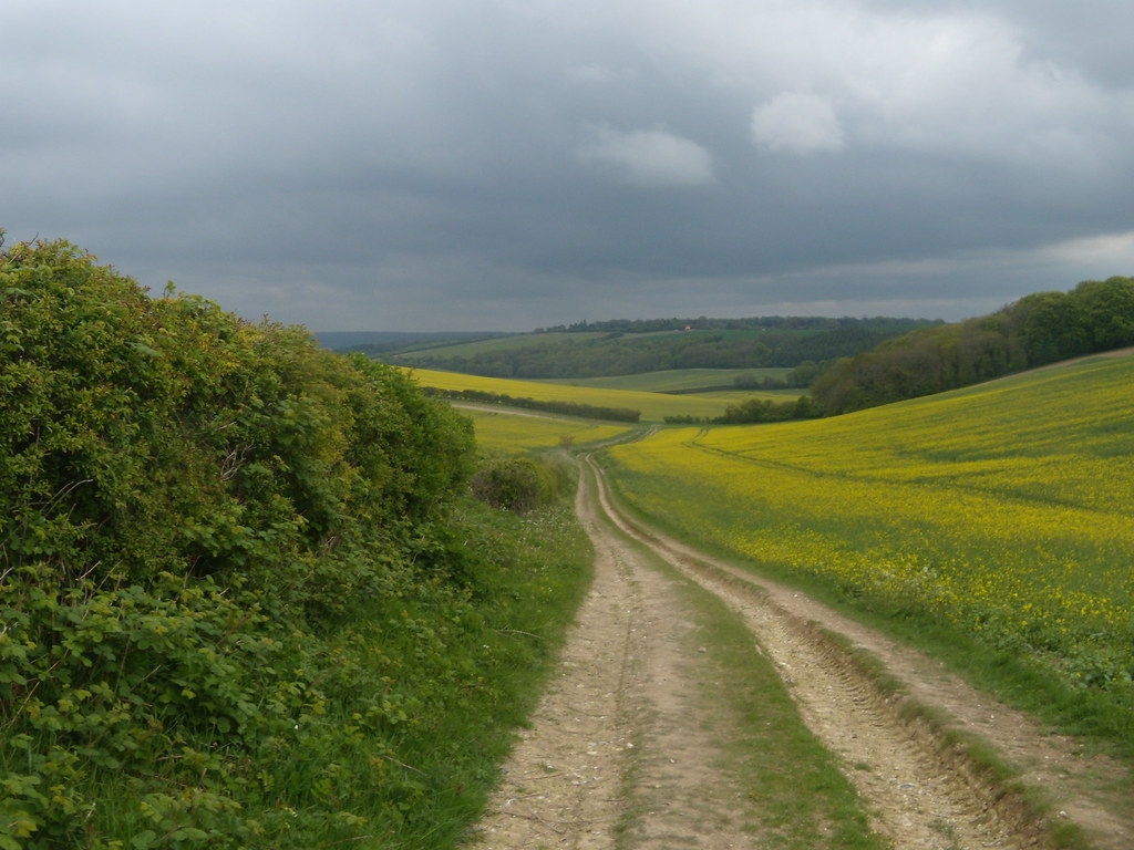 Path through large rapefields Goring Circular (via Moulsford