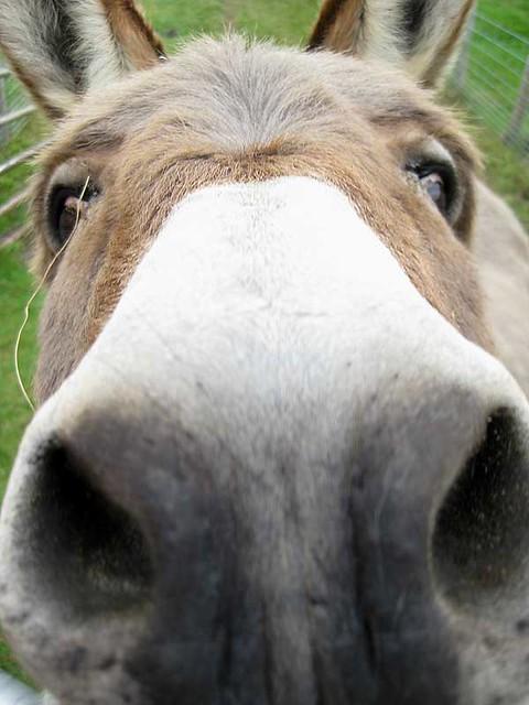 Farm Donkey Donkey Nose! | Geraldi...