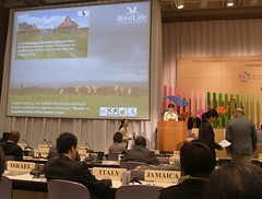 Tue, 26/10/2010 - 10:36 - From the UN Convention on Biological Diversity (CBD) meeting in Nagoya. By Ade Long.