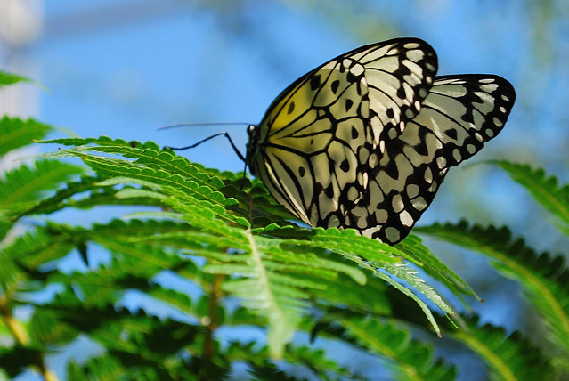 Butterfly Flickr Photo Sharing